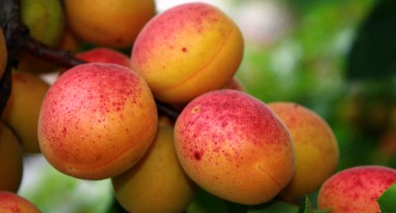 Tübitak'tan kalori hesaplama ve sağlıklı beslenme rehberi