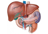 Karaciğer Yağlanması Nedir? Belirtileri Nelerdir ve Nasıl Tedavi Edilir?