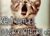 Kedi Temalı 25 Adet Duvar Kağıdı! (9)