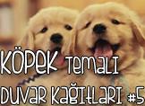 Köpek Temalı 25 Adet Duvar Kağıdı! (5)