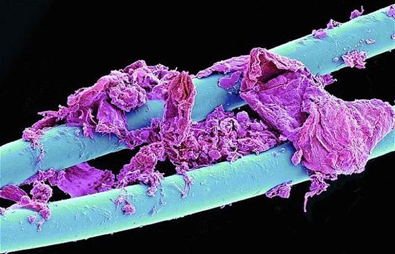 Günlük Hayatta Karşılaştığımız 20 Şeyin Mikroskobik Görüntüsü
