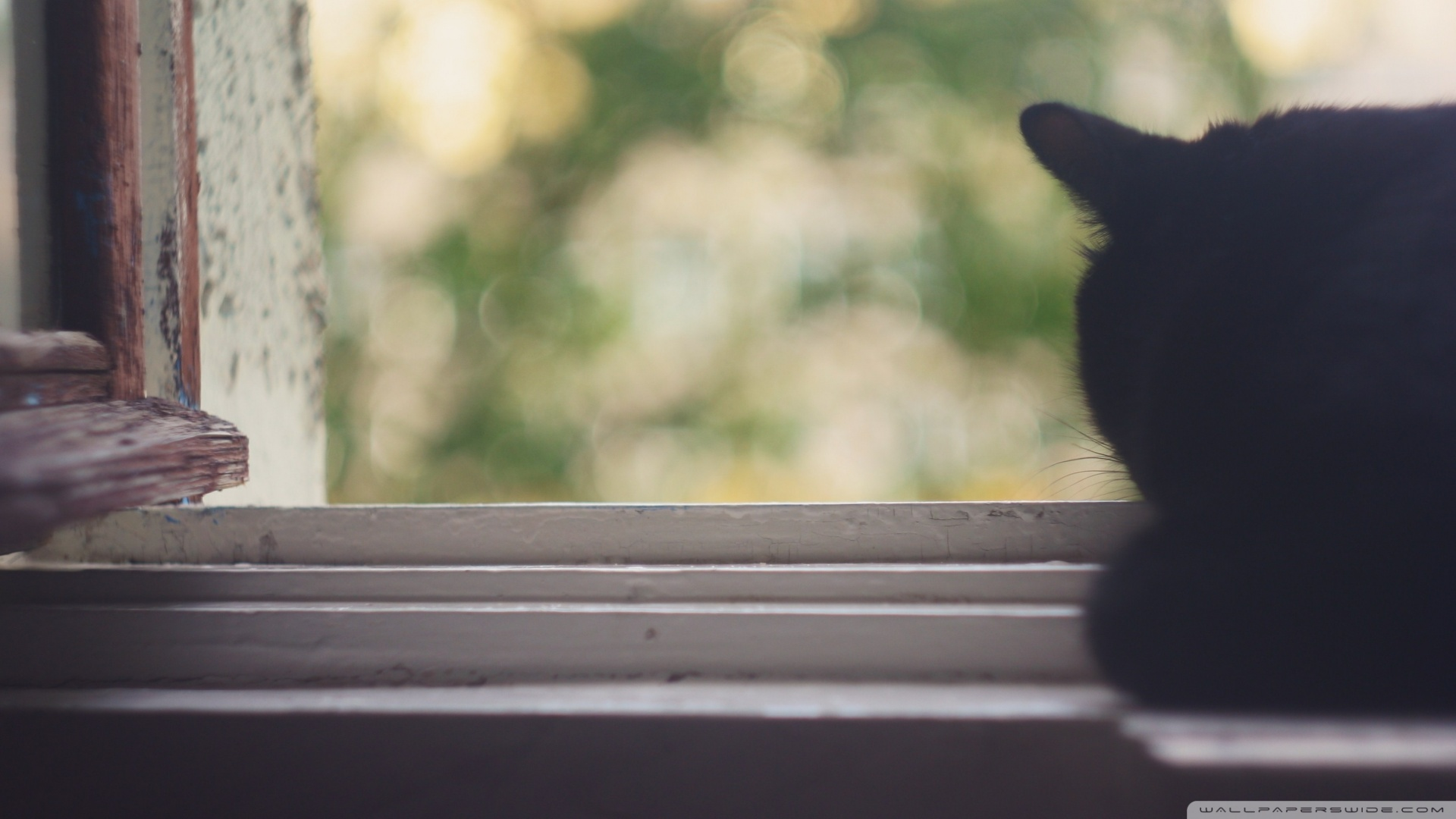 Kedi Temalı 25 Adet Duvar Kağıdı! (11)