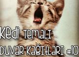 Kedi Temalı 25 Adet Duvar Kağıdı! (10)