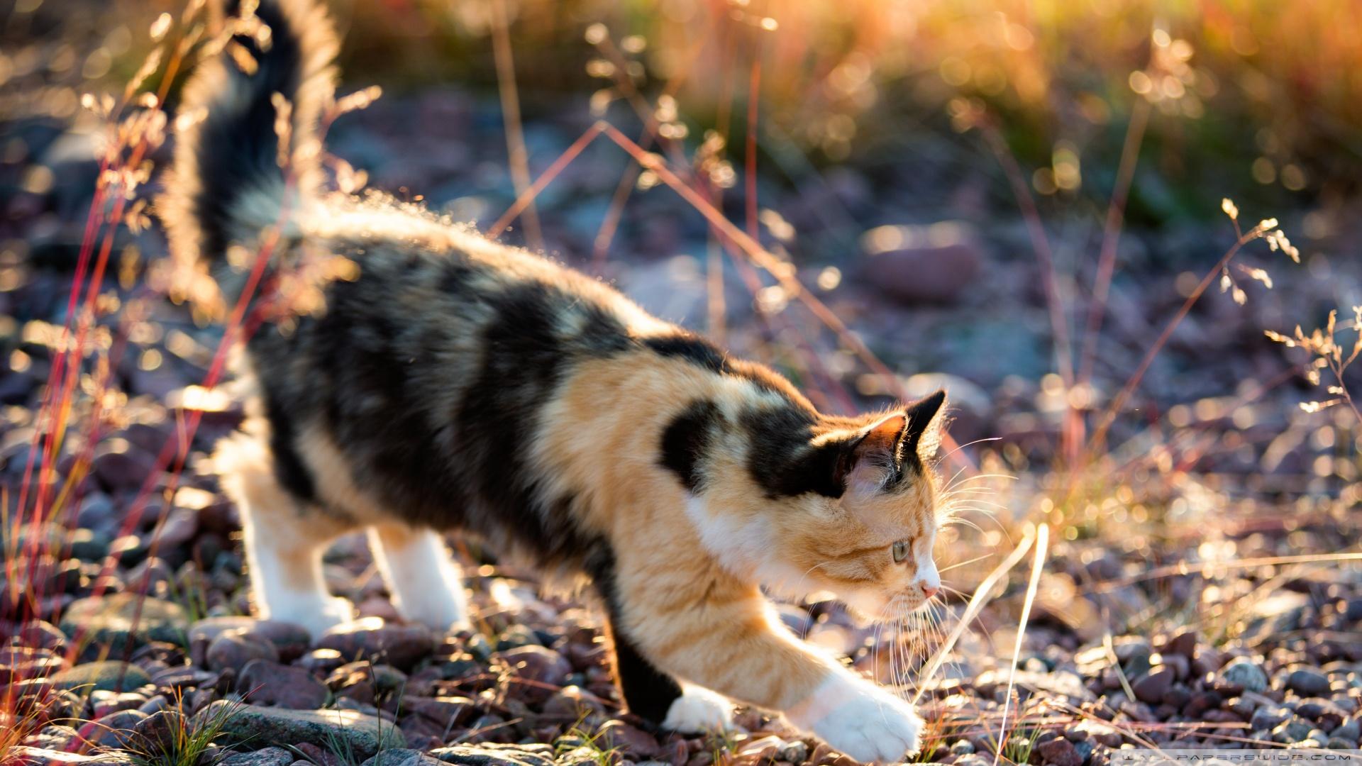 Kedi Temalı 25 Adet Duvar Kağıdı! (12)