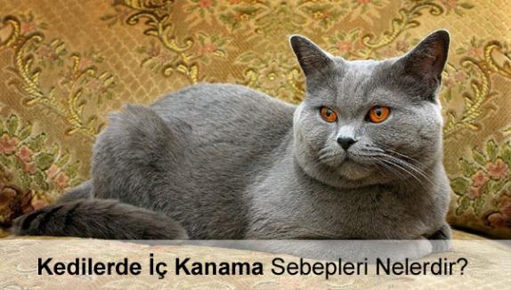 Kedilerde İç Kanama Sebepleri Nelerdir?