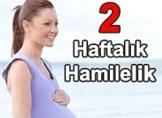 Hafta Hafta Hamilelik - 2 Haftalık Hamilelik (Gebelik)