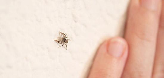 Hayvan Klişeleri - Örümcek