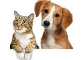 Hayvan Klişeleri - Hayvanlar Hakkında Yanlış Bilinenler