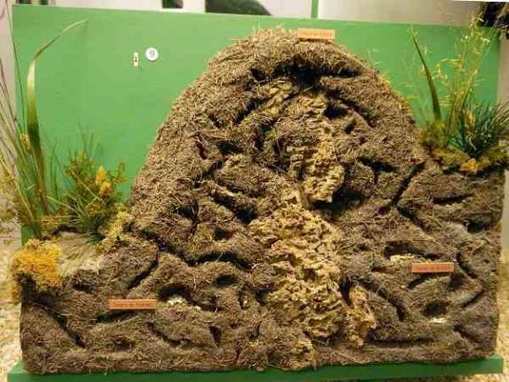 Karıncalar Hakkında Bilgi - 1