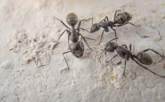 Karıncalar Hakkında Bilgi - 10