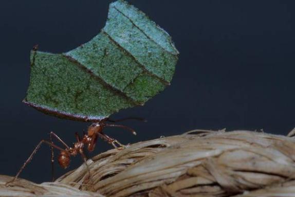 Karıncalar Hakkında Bilgi - 2