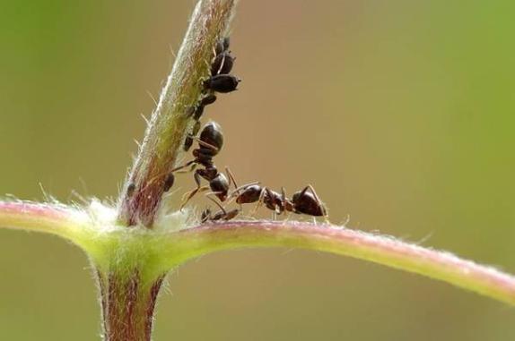 Karıncalar Hakkında Bilgi - 5