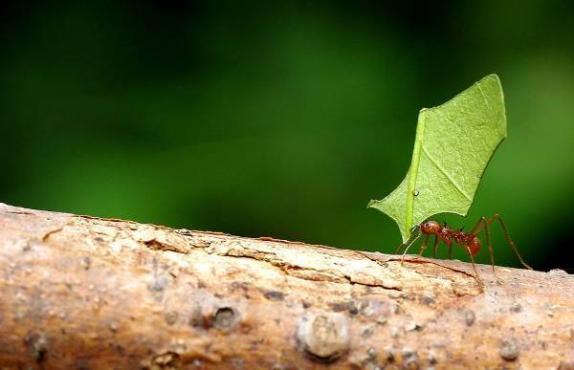 Karıncalar Hakkında Bilgi - 7