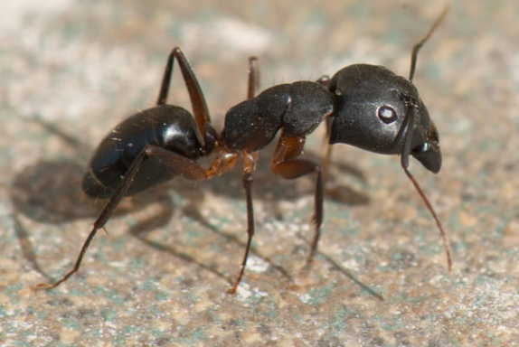 Karıncalar Hakkında Bilgi - 8