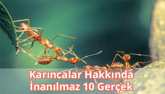 Karıncalar Hakkında Şaşırtıcı Bilgiler