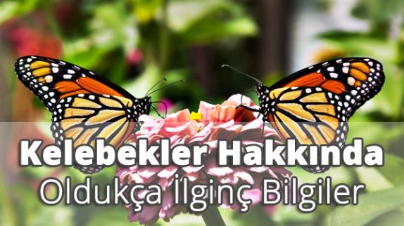 Kelebekler Hakkında İlginç Bilgiler