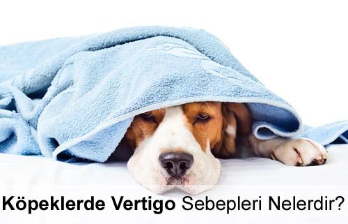 Köpeklerde Vertigo Sebepleri Nelerdir?
