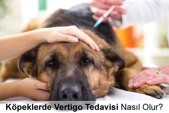 Köpeklerde Vertigo Tedavisi