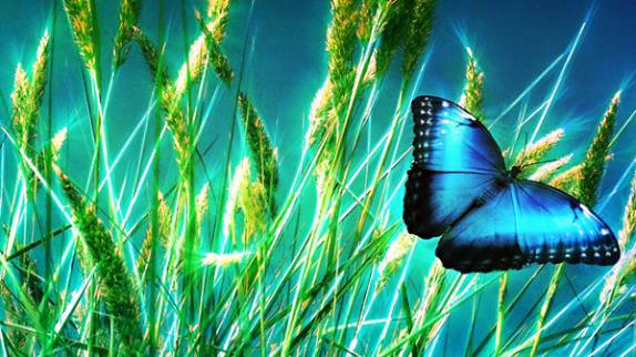 Kelebekler Zararlı mı?